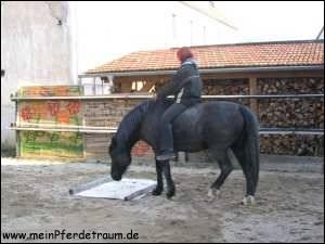 absenkungen brust pferd